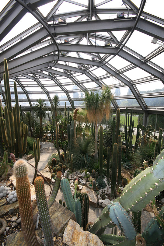 Cacti of every shape and size in the Botanic Garden Berlin. - <em>by SL Wong</em>.