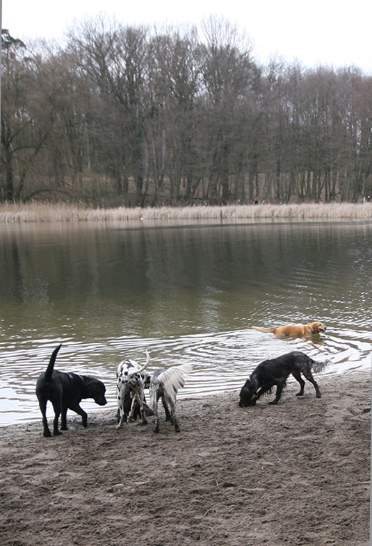 Sand, water and open spaces – what more would a dog want? - <em>by SL Wong</em>