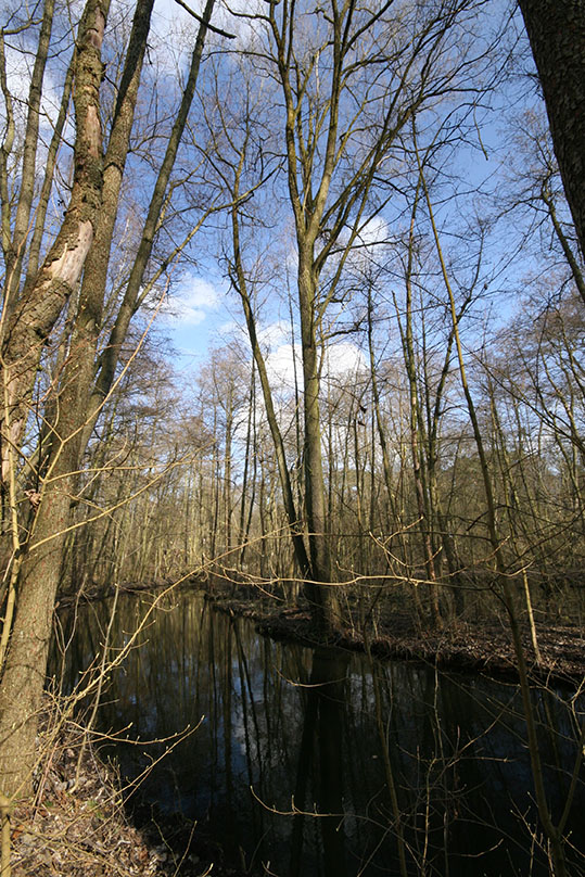 Grunewald's fens are protected as nature reserves. - <em>by SL Wong</em>