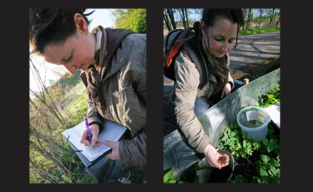 Toad fence programmes need volunteers such as Christina Zorn to check the presence of amphibians that get trapped behind the fences and record them. - <em>by SL Wong</em>