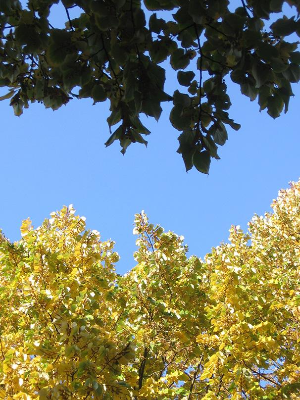 Kranoldplatz, after the big leaf shedding <em>- by SL Wong </em>