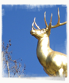 A Golden Stag
