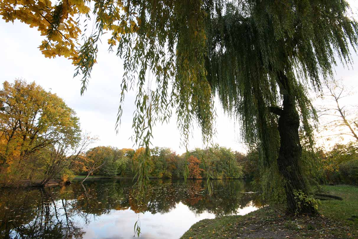 The pretty Carp Pond is surrounded by vegetation. - <em>by SL Wong</em>