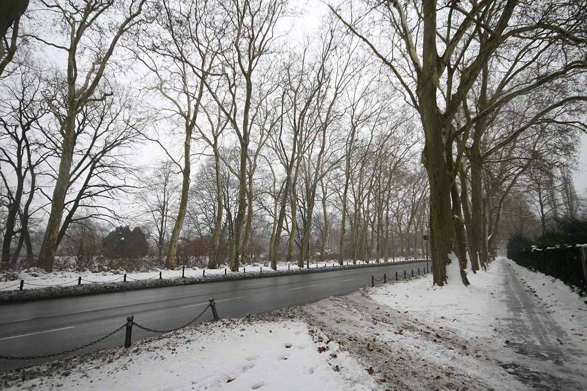 The century-old sycamore avenue is a defining feature of the park. - <em>by SL Wong</em>