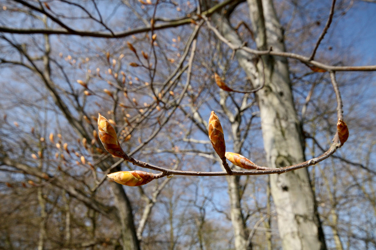 Tightly-curled leaves waiting for that unfurling moment. - <em>by SL Wong</em>