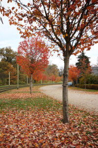 The colony's fruit trees are historically significant. - <em>by SL Wong</em>